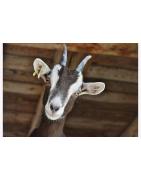 Litiere ET ALIMENTATION pour animaux : chevaux, vaches, chevres, moutons, volailles et lapins à venir récupérer à Longechaux ou nous contacter pour une livraison à domicile.